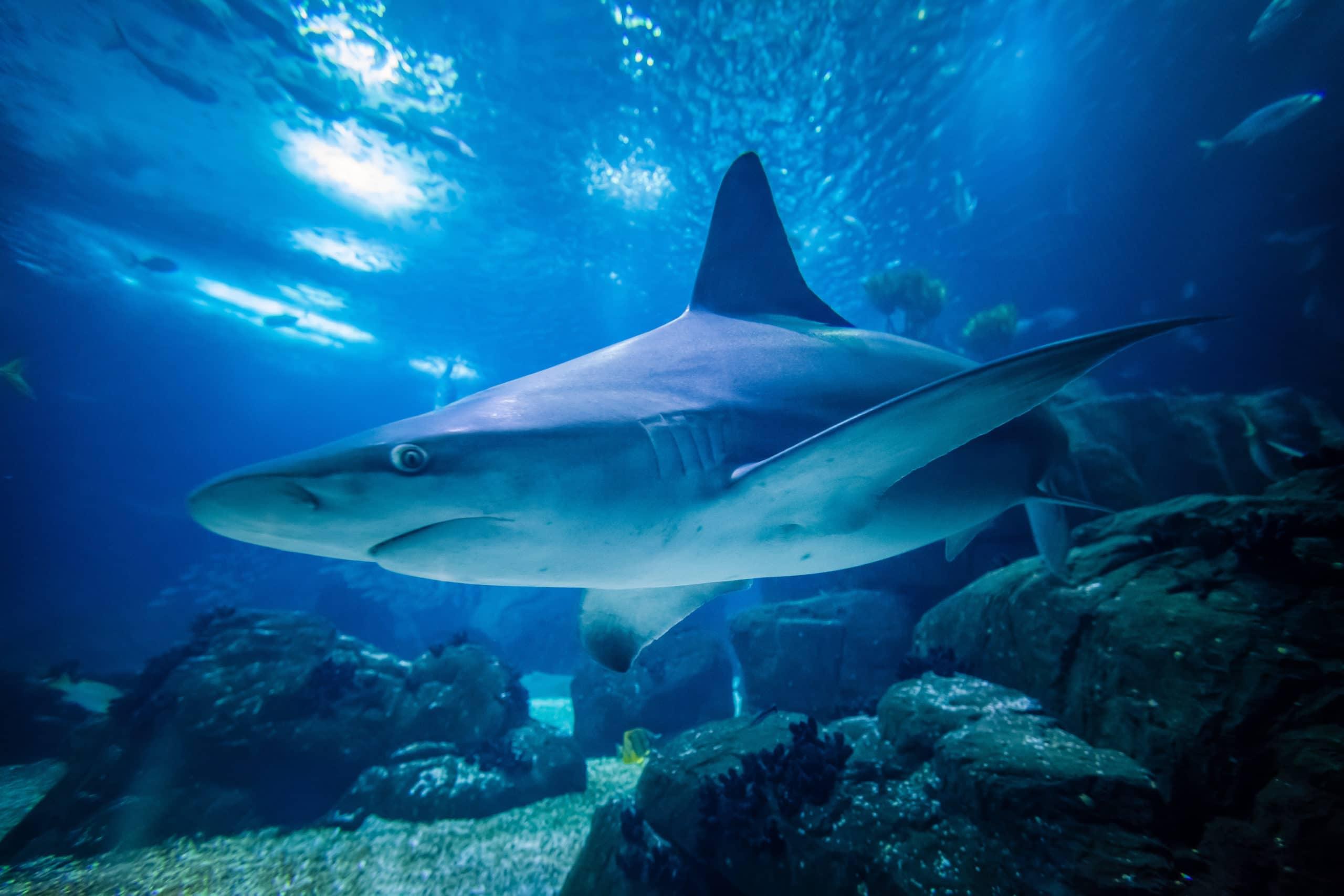 Royaume des requins