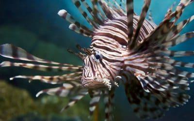 La collection de l'ancien aquarium est installée à Oniria